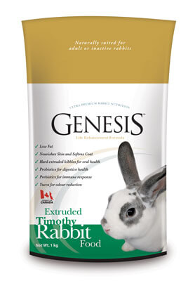 Genesis rabbit timothy